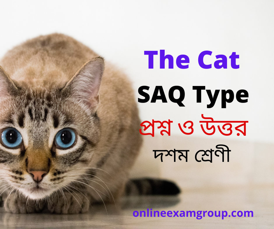 SAQ of The Cat Class X